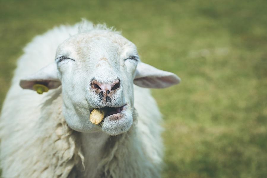 人工智能热潮袭来,谁在薅羊毛,谁会享红利?-薪媒体_O2O新商业媒体资讯平台